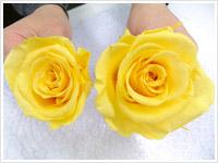 お花は一輪一輪開花作業を行います。